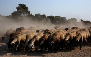 Προβληματικό το νομοσχέδιο της Αστυνομίας για τα Ζώα, λέει η Κυπριακή Εταιρεία Προστασίας Ζώων
