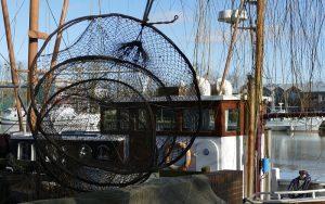 Βαριές ποινές για παράνομη αλιεία