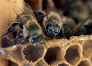 ΔΕΕ: Η Γαλλία ενημέρωσε έγκαιρα την Κομισιόν για την ανάγκη λήψης μέτρων για την προστασία των μελισσών