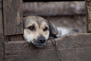 Νέα Πρωτοποριακή Νομοθετική Ρύθμιση της Πώλησης και Κατοχής Ζώων Συντροφιάς